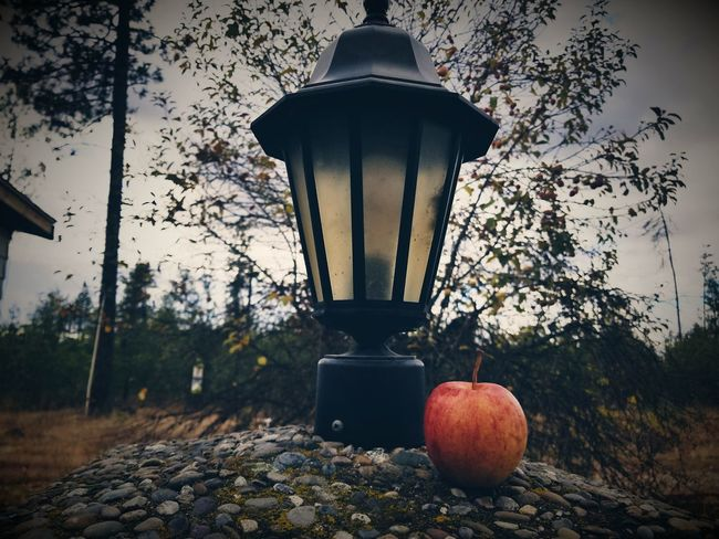 EyeEm Selects Fruit Tree No People Food And Drink Outdoors Day Freshness Nature Healthy Eating Food Close-up Sky Food And Drink Moody Sky Line Fall Beauty Lanterns Lantern Against The Bad Weather Fall Collection Front View Fruit Photography Fruits Winter Fall Colors
