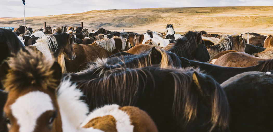 Horses on landscape