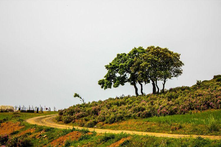 Tree Hugging A