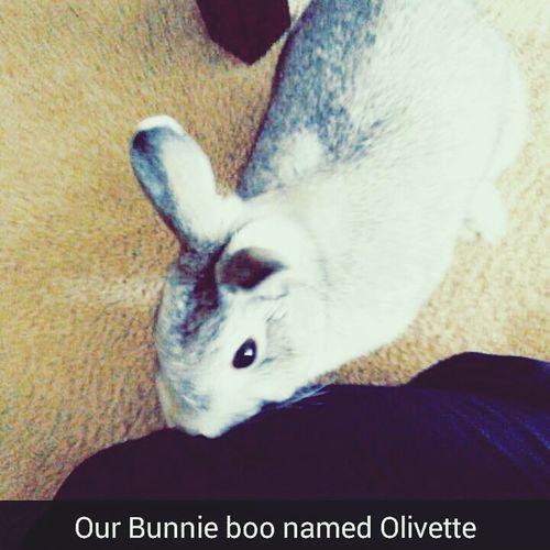 Our Bunnie-Boo love child 🐇🐰 Hi!