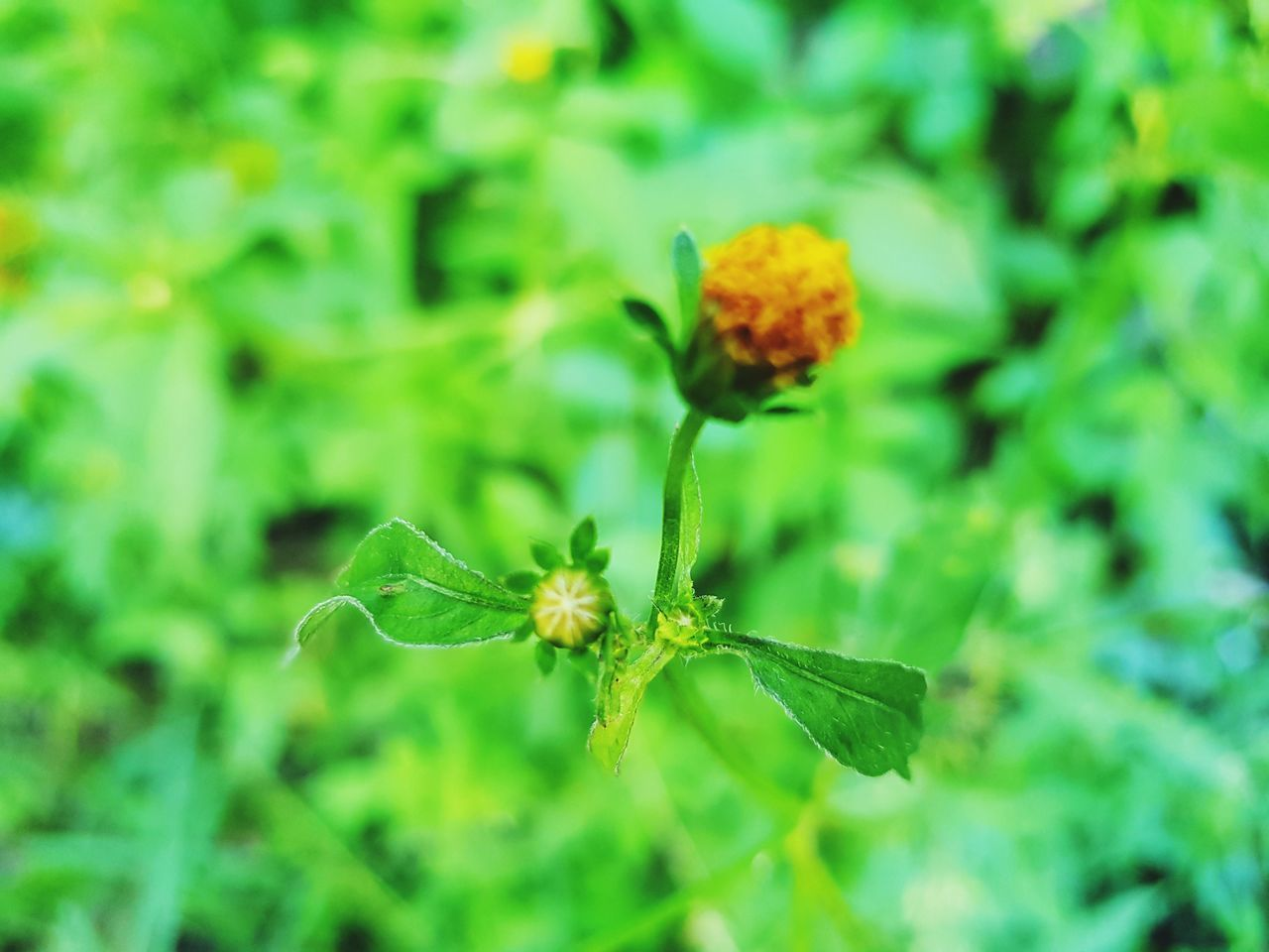 flower, growth, green color, plant, nature, fragility, beauty in nature, freshness, outdoors, no people, petal, flower head, close-up, day, leaf