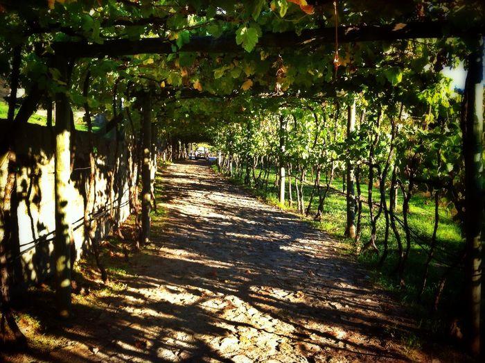 Wine Vinyard Autumn Colors Chilling Eyeemporto