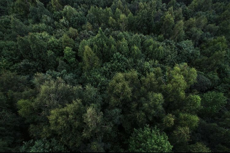 View From Above Dronephotography Drone Photography Droneshot From My Point Of View Viewfromthetop View Into Land From Above  Earth_Collections Earth Forest Photography Forest Trees And Nature Nature_collection Nature Photography Beauty In Nature Green Color Tree Backgrounds Full Frame Forest Close-up Green Color Green Plant Life Pine Tree Pine Cone Evergreen Tree Woods Pine Woodland The Great Outdoors - 2018 EyeEm Awards