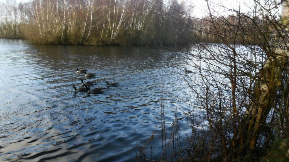 A little Walk around Cold Daneshill Lake Ducks Trees Water