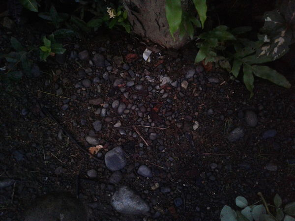 Stone stone.