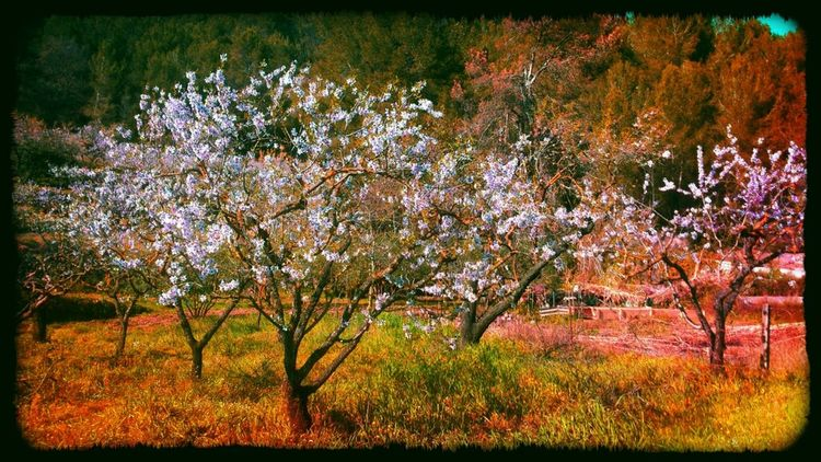 The band Nature Landscape Catalunya Photography Eye4photography