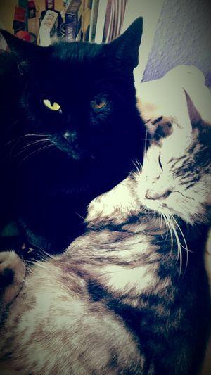 Katzii ♥ Kiara&Helmchen Süß!