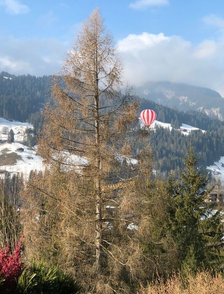 Pretty red n white balloon... Red And White Bolonie Art Gstaad Bolonie Style Bolonie Tree Nature Day Sky Mid-air Flying Adventure Beauty In Nature Growth Scenics Outdoors No People Mountain Extreme Sports Hot Air Balloon Parachute EyeEmNewHere Shades Of Winter