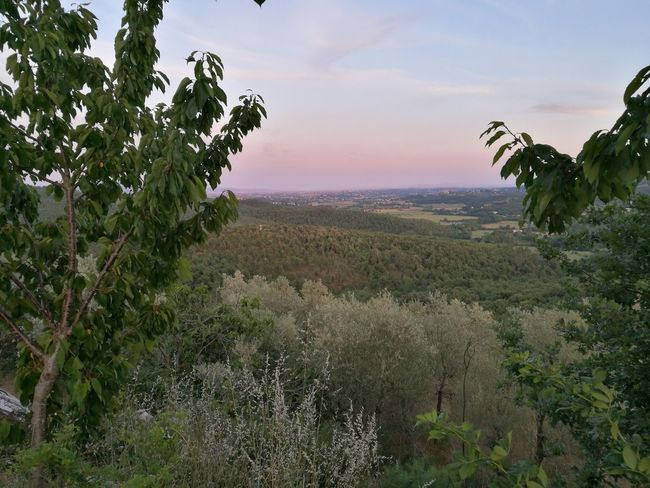 Tree Growth Nature Field Agriculture Rural Scene Plant Beauty In Nature Scenics Landscape Outdoors Branch Sunset Green Color Summer No People Tranquility Springtime Sky Leaf Italia Tuscany Nature Arezzo Beauty In Nature