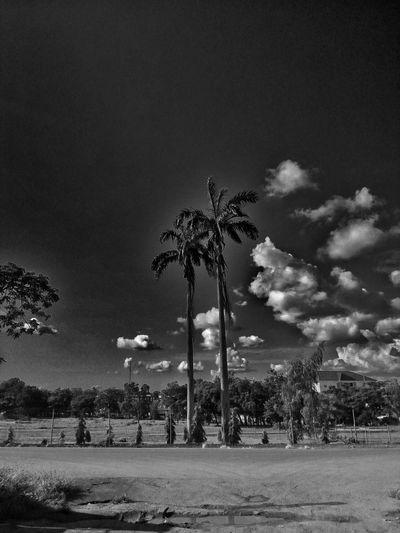 High palm 🙋. Sky Arts Culture And Entertainment Outdoors Tree Palm Trees Palm Nigeria Ifechiworks Wordplay Eyeeminstagram EyeEm