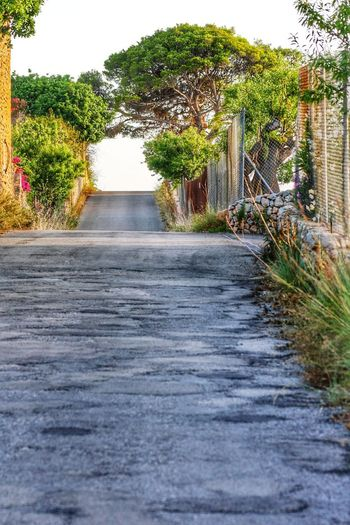Lonely street in Spain 🇪🇸Inoutdoors No People Tree Day Nature Sky The Way Forward Beauty In Nature City SPAIN Calaratjada Street Sommergefühle Mallorca Holiday Nature Summerfeelings Agriculture Follow4follow Followback Like4like Scenics Road Landscape Beauty In Nature EyeEmNewHere