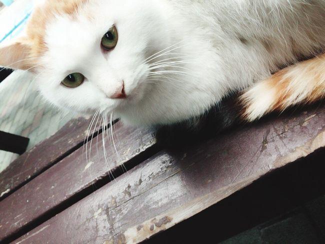 野良猫 Cat しろ White 大学 雨宿り 三毛猫 ねこ 猫