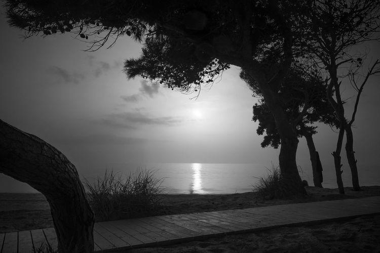 Serenity Long