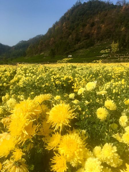 Flower Yellow Nature Field Beauty In Nature Growth EyeEmNewHere