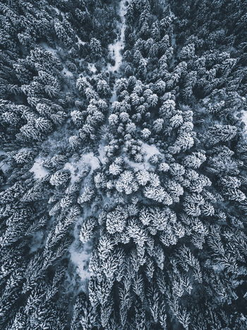 Aerial Shot Drone  Nature Pine Snow ❄ WoodLand Aerial Photography Backgrounds Beauty In Nature Cold Temperature Day Frozen Full Frame Nature Nature_collection No People Pattern Pine Tree Pine Woodland Snow Snowflake Tree Weather Winter Wonderland