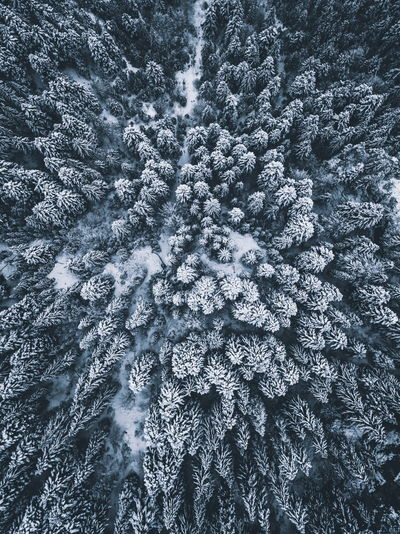 Full Frame Shot Of Tree In Forest During Winter