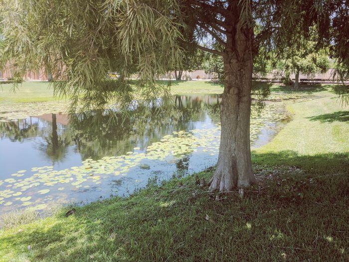 A mais linda igreja de Orlando. Water Reflection Lake Tree Outdoors Beauty In Nature Nature No People Grass