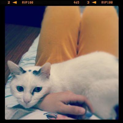 夜深人靜的時候,某隻貓喜歡趴在我的肚子上撒嬌。所謂甜蜜的負擔!?