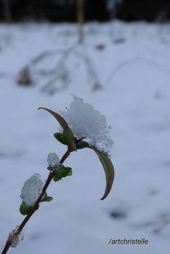 fleur imagination éphémère Carte Postale Une Rose En Hiver EyeEm Best Shots Shades Of Winter