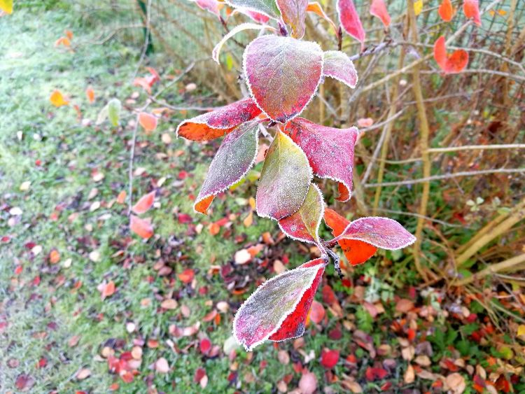 Beauty In Nature Fragility Pink Color Growth Frost Freshness