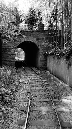 Railroad Track The Way Forward Arch Tree Tunnel Bare Tree Diminishing Perspective Outdoors Vanishing Point Passing Straight Built Structure Transportation Train Track Day Atlanta Zoo Monochrome Photography