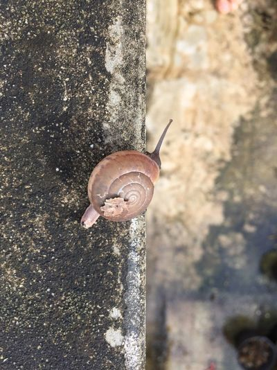 Snail on the