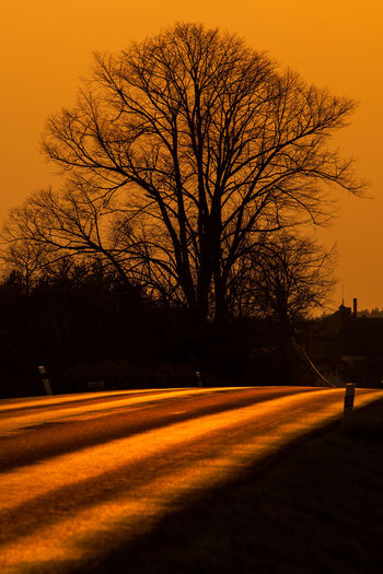 Tree Road Sky Bare Tree Sunset Orange Color Nature Transportation No People Silhouette Branch Outdoors Beauty In Nature Scenics - Nature Road Travel On The Road On The Road Again Autumn Autumn Mood Landscape Czech Road Less Travelled Empty Road Empty Capture Tomorrow
