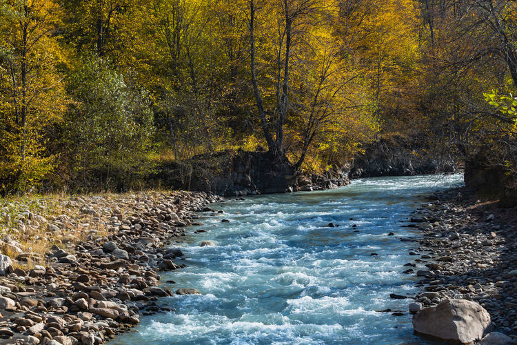 Scenic view of stream flowing through forest during autumn