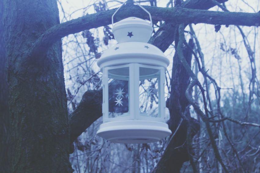 Forest My Shot  Memorise Silence Is Killing Me