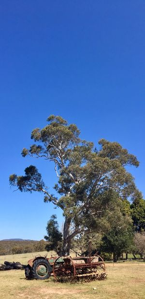 Tree Clear Sky No People Blue Day Nature Tranquility Growth Sky Outdoors Beauty In Nature Mammal