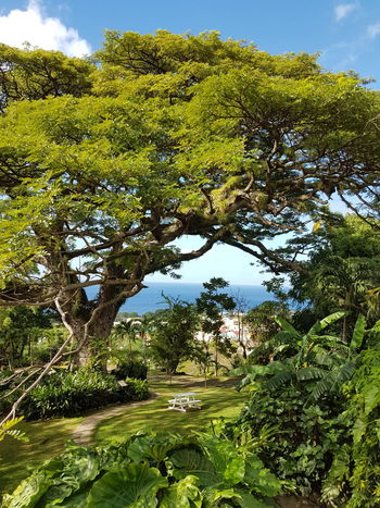 This Is Latin America Basseterre EyeEmNewHere St. Kitts Beauty In Nature Branch Caribbean Cloud - Sky Day Forest Grass Green Color Growth Landscape Nature No People Outdoors Plant Romney Manor Scenics Sky Tranquil Scene Tranquility Tree