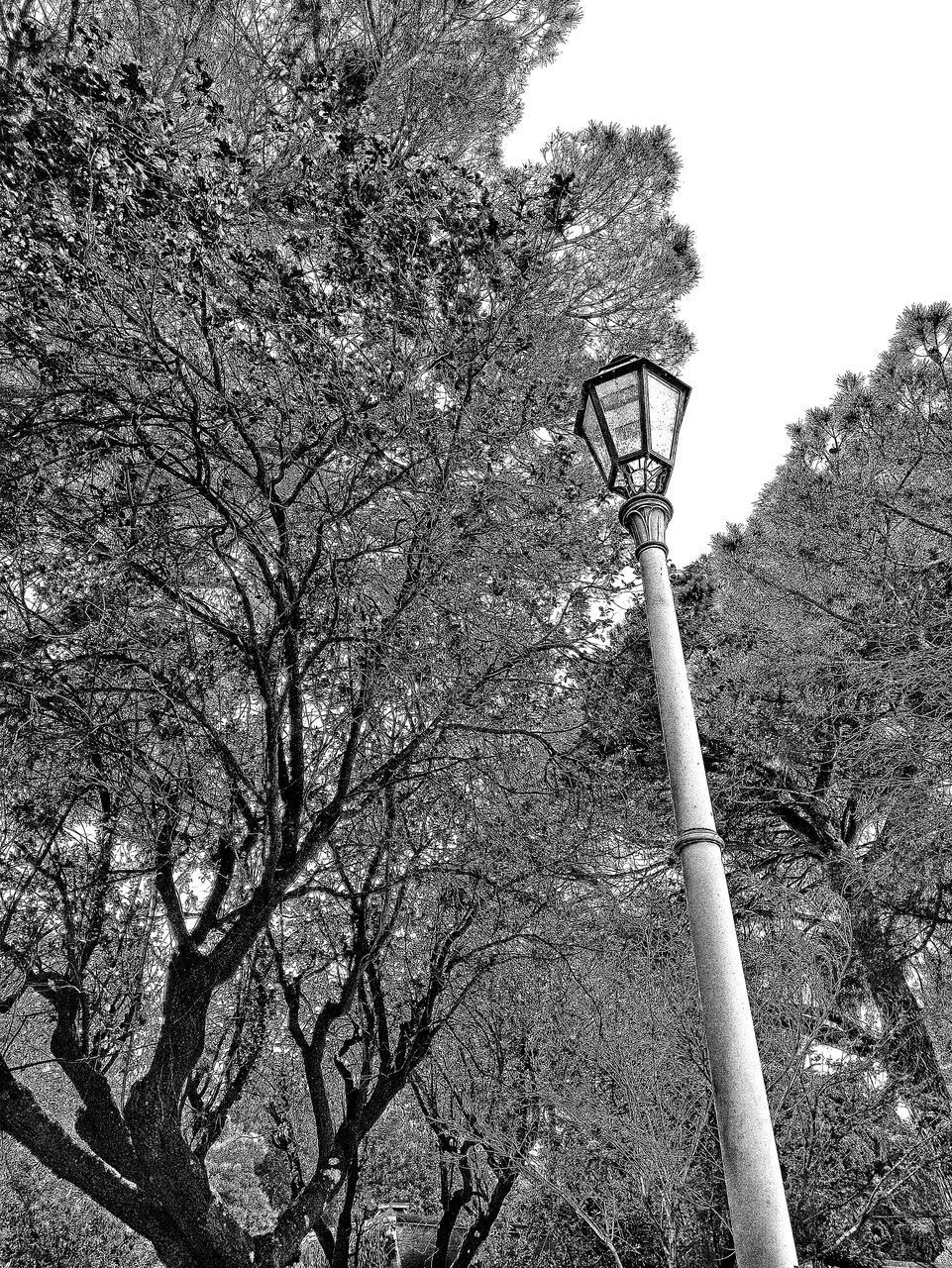 LOW ANGLE VIEW OF STREET LIGHT AND TREE