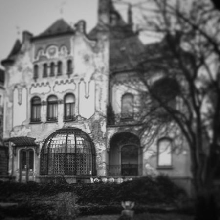 Architecture Budapest Glass Blackandwhite Ilovebudapest Winter Garden Wintergarden