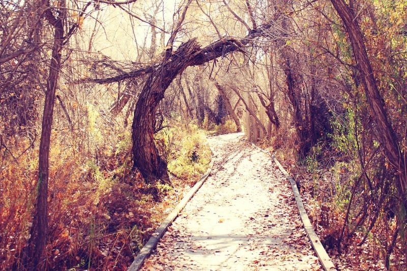 The path untaken. Chilly Day Autumn Colors Desert Beauty