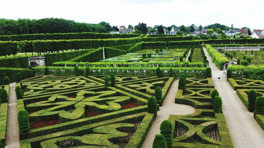 Growth Agriculture Nature Field No People Tree Beauty In Nature Outdoors Day Sky Tea Crop Freshness High Angle View Grass Field Beauty In Nature Travel Destinations Vacations Villandry Gardens Villandry Villandry Chateau Chateau De Villandry Villandry Castle Pattern Green Color