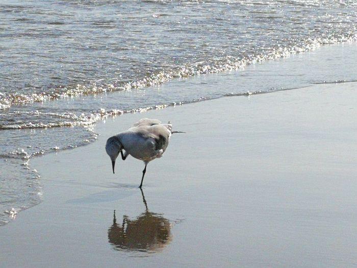 Gull Sea Bird