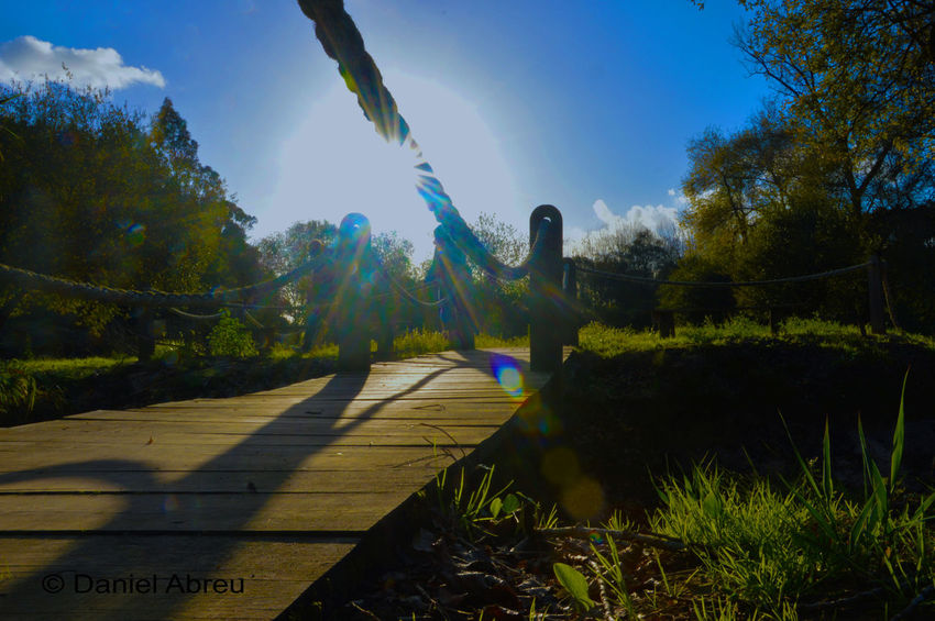 Day Footpath Lens Flare Outdoors Park Park - Man Made Space Shadow Sky Sun Sunbeam Sunlight Surface Level Tranquility Tree