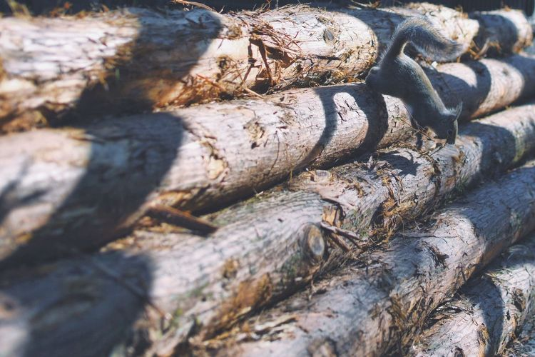Textured  Backgrounds Log Wood - Material Close-up Tree Trunk Nature Rough Full Frame No People Timber Tree Outdoors Day Animal Themes Forestry Industry EyeEmBestPics EyeEmbestshots EyeEm Masterclass EyeEm Gallery