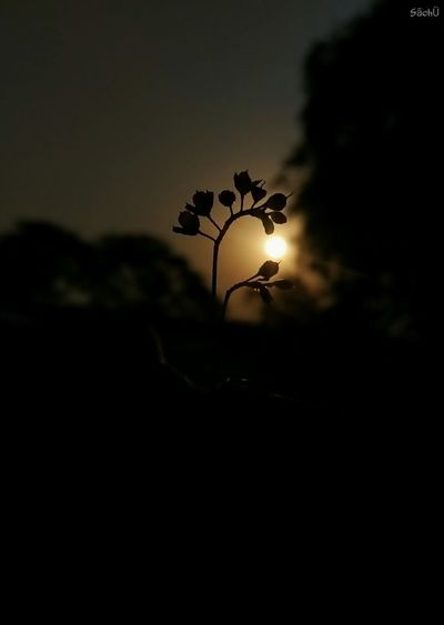 Silhouette Sunset No People Nature Close-up Outdoors Beauty In Nature ✌ Myclick💚