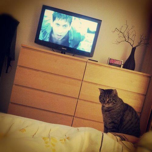 #cat #katze #jagt На охоте Cat Katze Jagt