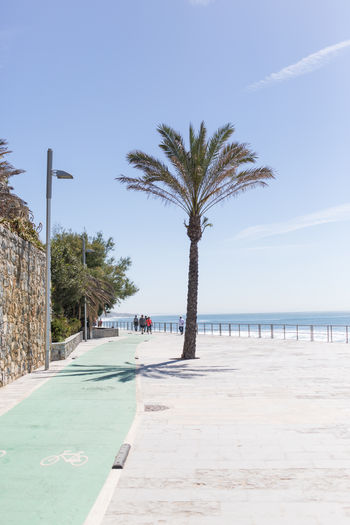 Palm trees on beach against clear sky