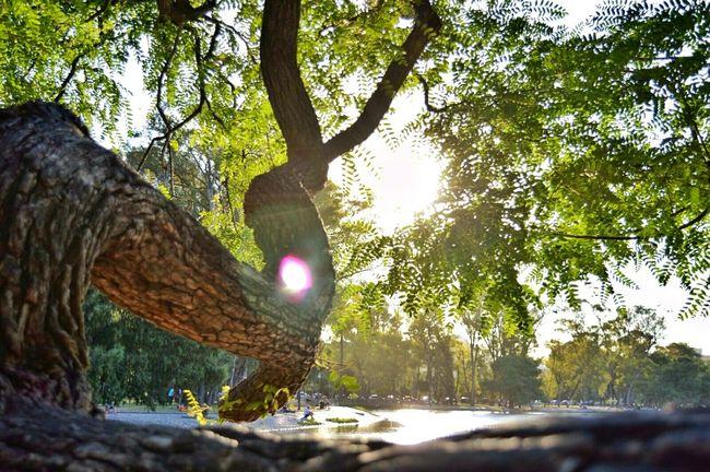 Mi primera foto con la Nikon. Como cuesta incursionar con la cámara reflex! Nikon D3200 Nikonphotography árbol Leaves Leavesporn Lake Tree Lagoderegatas Belgrano Buenos Aires, Argentina  Afternoon