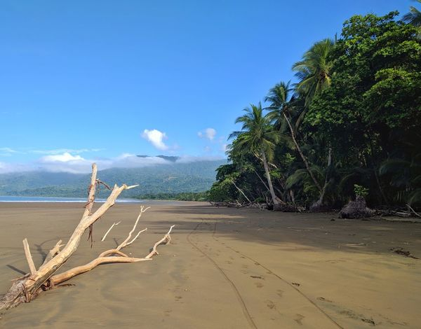 Playa Uvita Tree Sand Sky Beach Blue Landscape No People Outdoors Water Nature Day Driftwood Summer Sun Traveling Costa Rica Palms Palm Beauty In Nature Scenics Ocean Palm Tree Freshness Low Angle View Central America Perspectives On Nature
