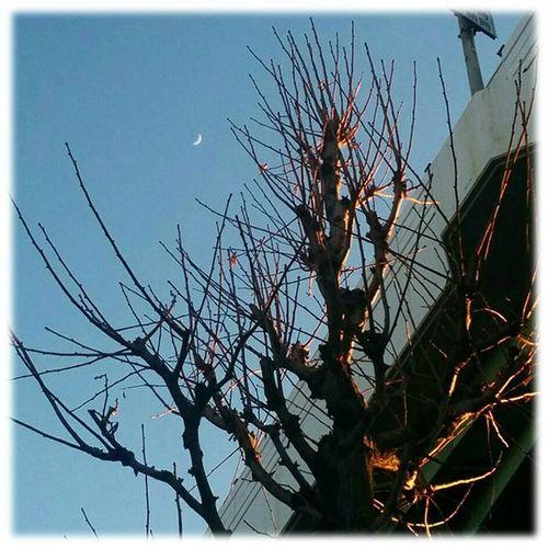 🌛 夕焼けに染まる街路樹の上にお月様🎶☺🎶The crescent moon on top of the street trees that stain sunset ※ ※ 三日月 Crescentsmoon 空 Sky 風景 Landscape 自然 Nature 日本 Japan 名古屋 Nagoya Aichi 綺麗 Beatiful 癒し Comfort 休息 Rest 安らぎ Peace Happiness 😚 Moon_Japan_nagoya_mitu