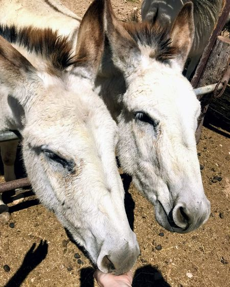 Close-up of two horses in a farm