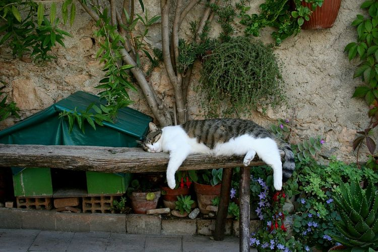 Cat by plants against trees