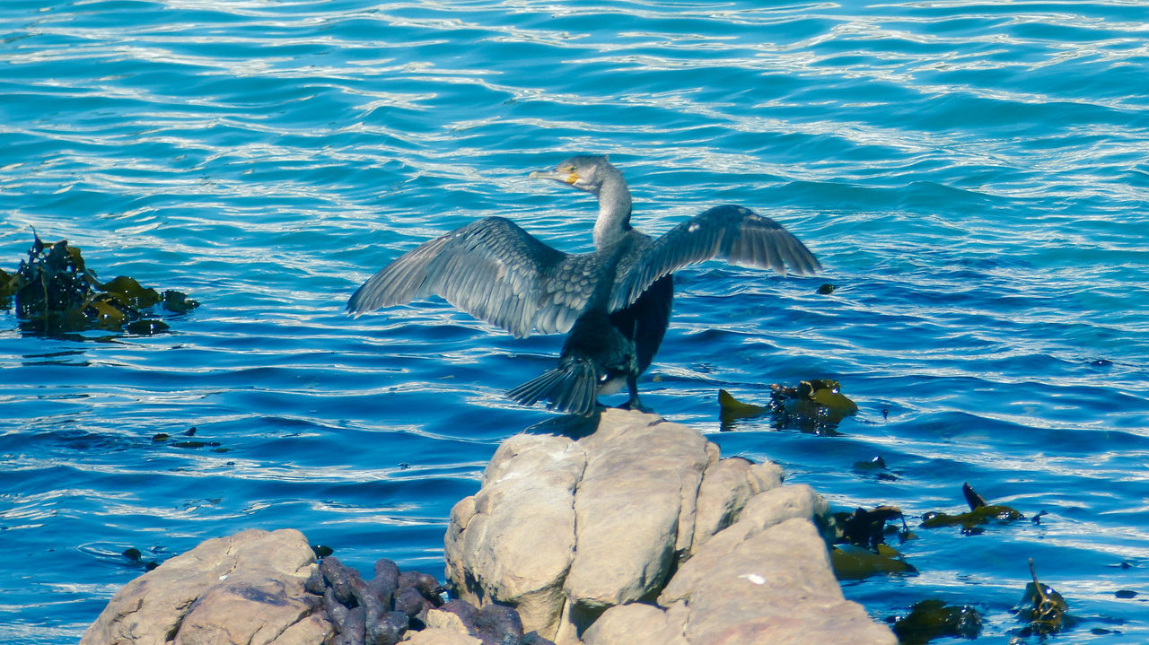 water, bird, animals in the wild, animal themes, animal wildlife, animal, vertebrate, spread wings, group of animals, flying, lake, nature, no people, day, rock, beauty in nature, two animals, rock - object, solid, flapping