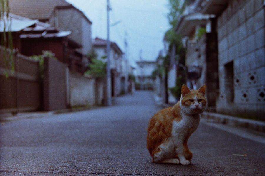 She ignored me... Edited 50mm Leica3f Summitar Cat Lomographyfilmiso100