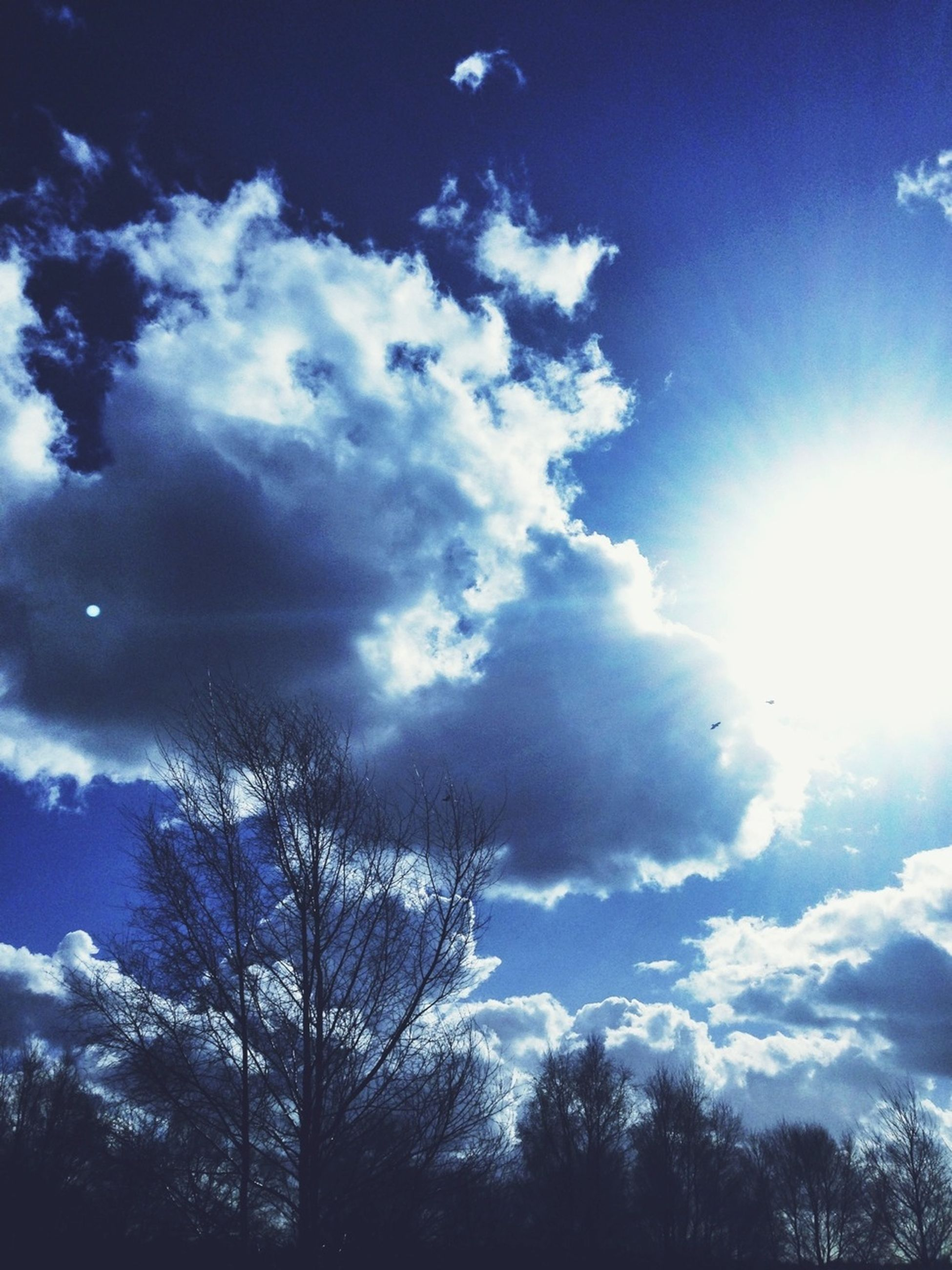 sun, low angle view, sky, sunbeam, tree, sunlight, beauty in nature, cloud - sky, tranquility, scenics, silhouette, nature, tranquil scene, blue, lens flare, cloud, bright, sunny, cloudy, idyllic