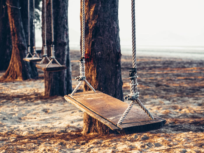 View of swing hanging from tree